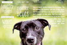 dog.adoption