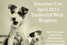 Fox Terrier Fun Walk Posters / Posters used to advertise our Fox Terrier Fun Walks in Brighton, every April and October