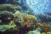 Diving / Places to dive before dying