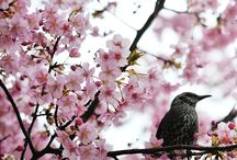 beautiful  Japan  no,2 / 奈良以外の美しい日本