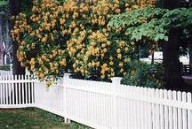 picket fence / by Debbie Elliott