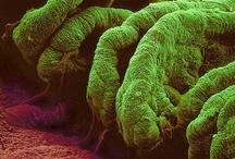 Curious Microscopy