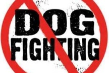 Stop Dog Fighting Worldwide, Dog Petitions / #AntiDogFighting #StopDogFighting #ProsecuteAllDogFighters
