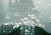Venezia. Where I belong