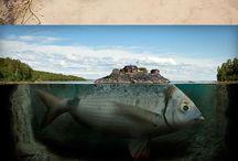 Photos, Photo manipulation, Optical illusions