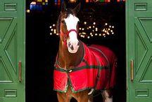 Christmas Horse Stuff