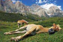 Nature and animals / by Razvan Ionita