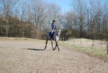 Horse for Lise