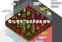 Garden Planning & Layout Ideas / Resources for helping beginning gardeners plan their backyard garden, including layout ideas for raised beds and ground beds.