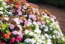 The Colorful Shade Garden / Plants that bring color to those shady spots in your garden.