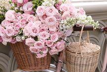 Blooms / Floral Arrangements. Flowers as inspiration.