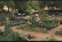 Gardens / by Becky Bixler