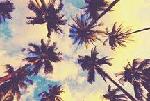 Beach'in / Palm trees and bikinis
