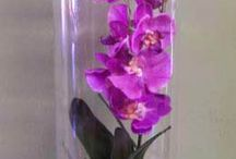 orchids and flowers