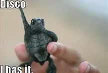 Turtlesit :)