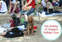 Pet Safety  / Posts from Two Little Cavaliers discussing Pet Safety Tips. Dog Safety. Keeping your dog safe throughout the year. Visit http://twolittlecavaliers.com/category/dogs/pet-safety