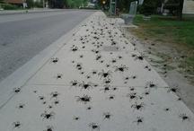 Spider Swarm / Spider Swarm! Lookout.