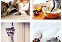 Animaux - Nos plus belles images