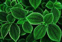 Verde cor da esperança.