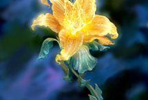 Kvetina malovana