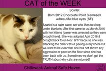 Cat of the Week 2018
