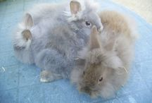 A Trip of Rabbits / Collective Nouns for Rabbits