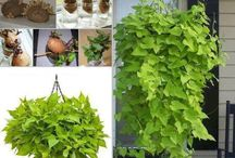 Easy, fast growing plants and trees.