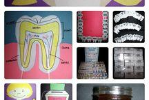 ~Classroom Teeth Unit
