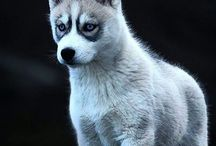 Zwierzęta-foto