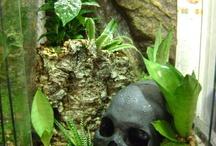 Tarantula terrarium