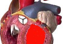 DR K hjerte