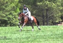 Inspriational Equestrians and Horses / Equestrians and horses that inspire and amaze us