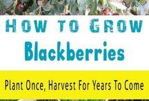 Fruit gardening