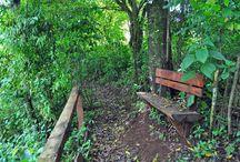 Parque de Puro Moconá Lodge / Recorriendo los senderos de Puro Moconá Lodge podrás identificar árboles nativos, orquídeas, frutales originarios, avistar aves, descansar en los sectores de relax y apreciar desde los miradores las magníficas vistas del Río Uruguay.