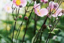 Blomsterlåda