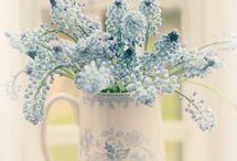 sweet flower blue