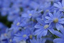 Cornflower Blue / My favorite color. Not purple, not blue.
