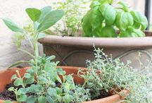 Sprin  herb sheet