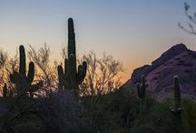 Arizona Living / Pictures of the great aspects of Arizona Living! We have great weather 9 months of the year!
