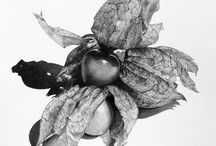 Still life / Some of the other subjects I have chosen to draw - I love finding new textures and challenges