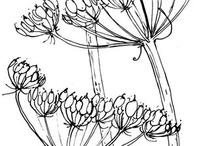 Botanisch tekenen