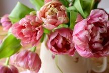 Decorating/Floral Arrangements