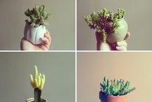 SUCCULENTS ARE PEOPLE TOO