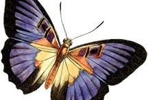 Butterfly / о бабочках
