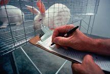 investigacion con animales