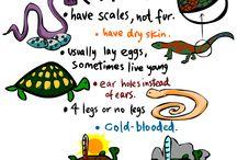 N sciences. Animals