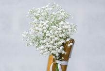 Collection GYPSOPHILE ONLY