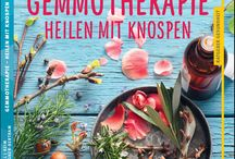 Gemmotherapie / Die Kraft der Knospen