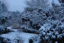 The Winter Garden / This is the garden I grew up in and cut my teeth on - I will be adding to this board regularly with winter pics and tips as well as with frosty pics from other gardens