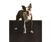 Just 'Floor' Fun / What does your carpet & your dog say about your personality?